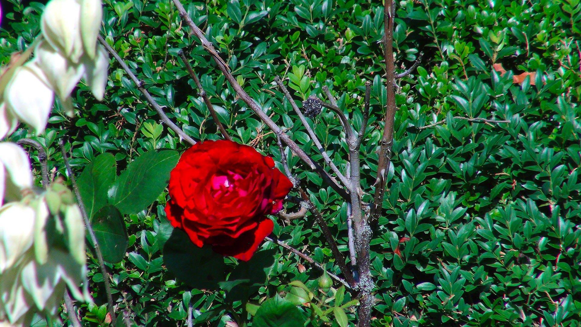 Valley View Farm Garden Roses