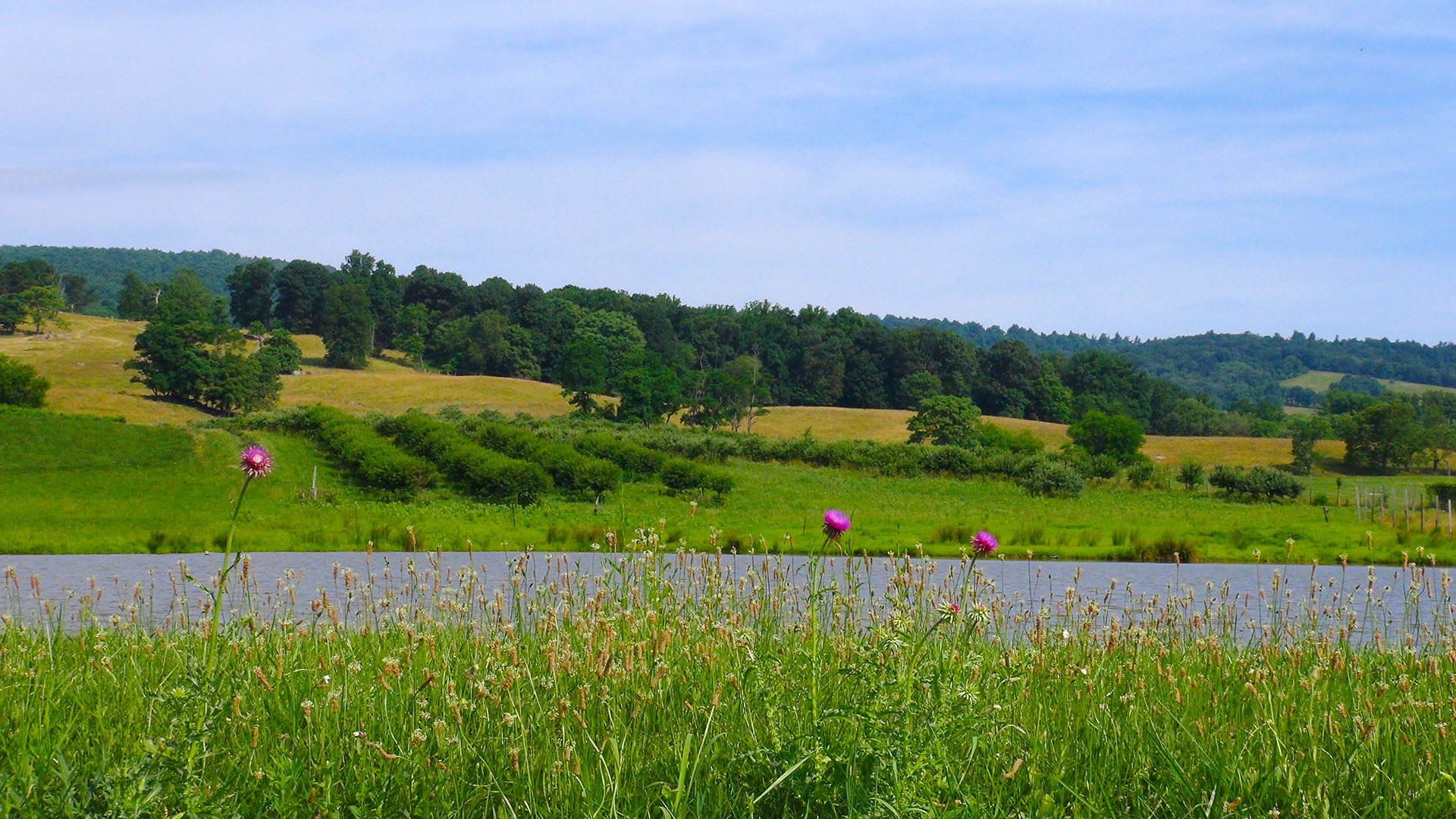 Valley View 500 acre farm pond flowers
