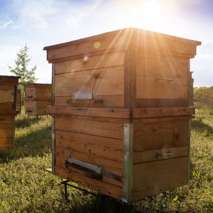 Valley View Farms, Apiary, bee hive in an open field with sun light beaming over top