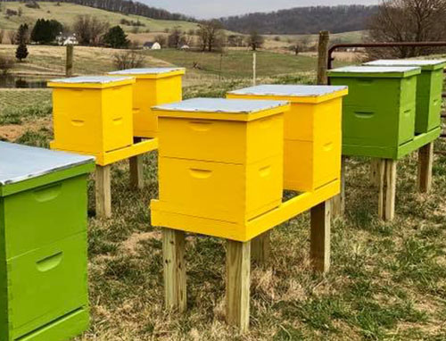 Adopt a Hive, Valley View Farms - View of Yellow and Green Bee Hives