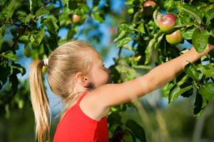 Pick your own: Now more than ever - Fauquier Times